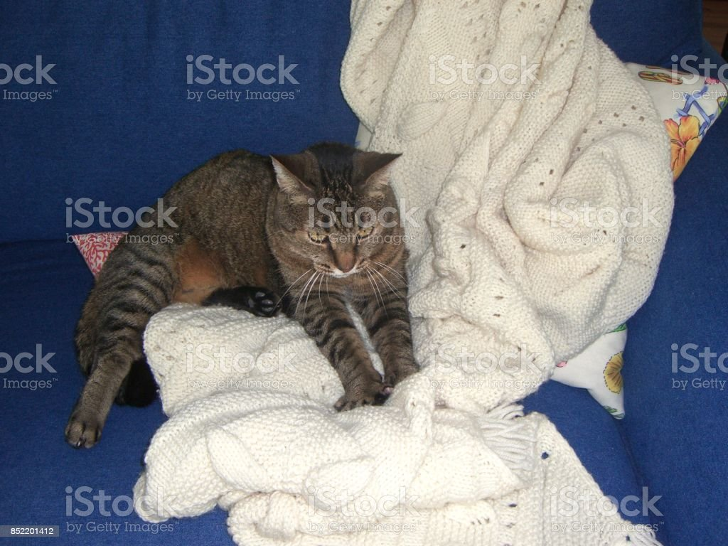 I knead this afghan! stock photo
