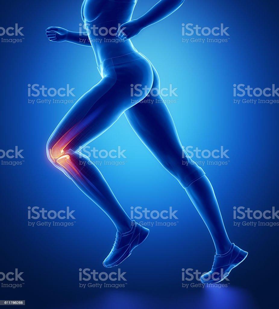 Knee anatomy stock photo