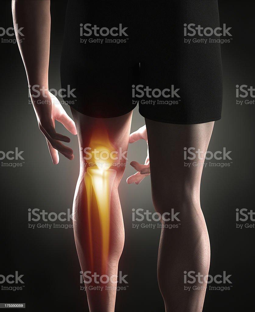 Knee antomy royalty-free stock photo