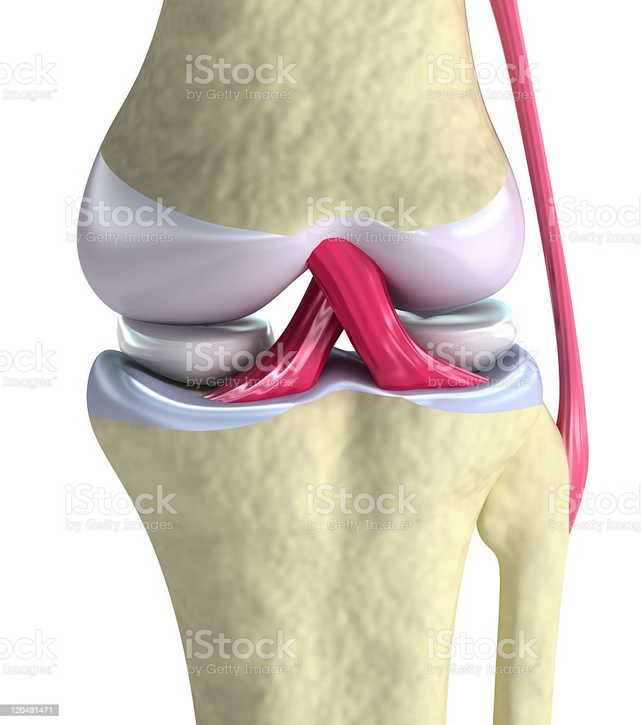 Knee joint closeup view stock photo