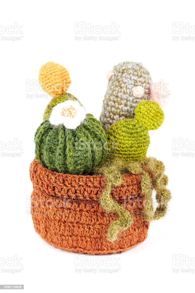 knitted cactus flower with blossom in pot stock photo