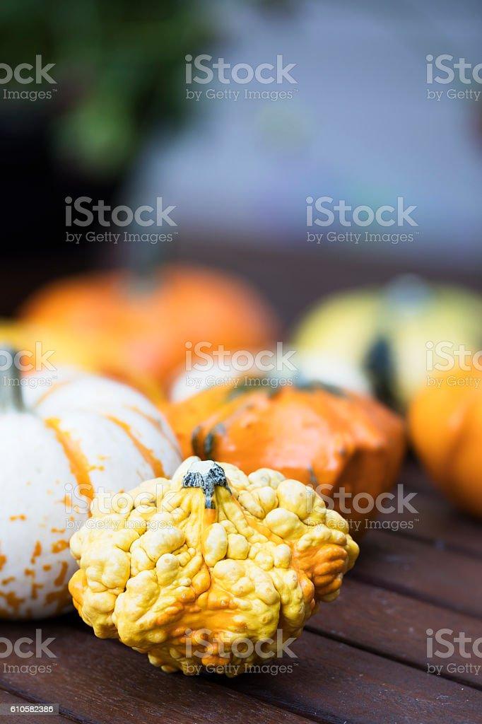 Knobby Autumn Gourd stock photo