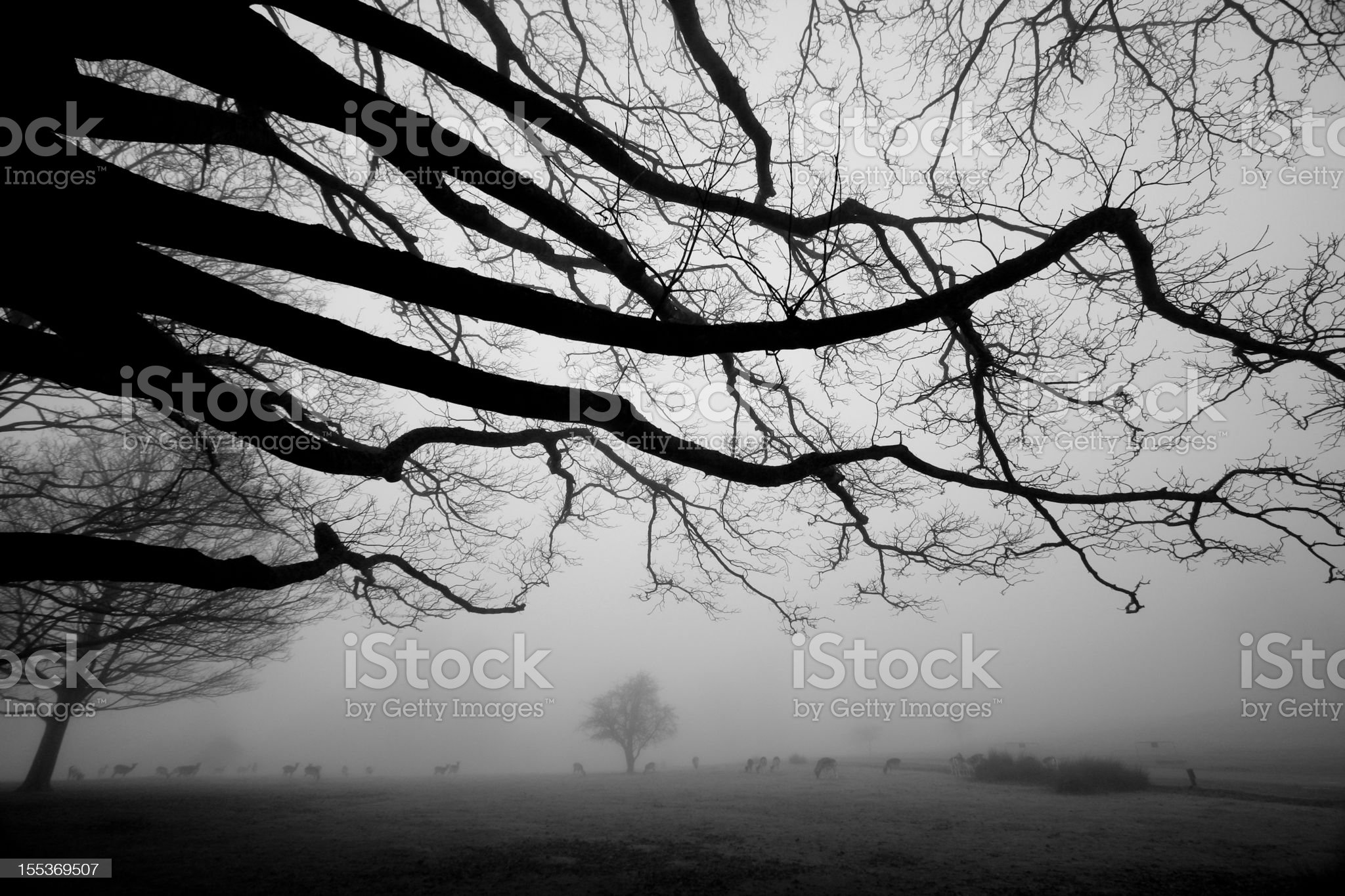 Knole Park in Kent, England royalty-free stock photo