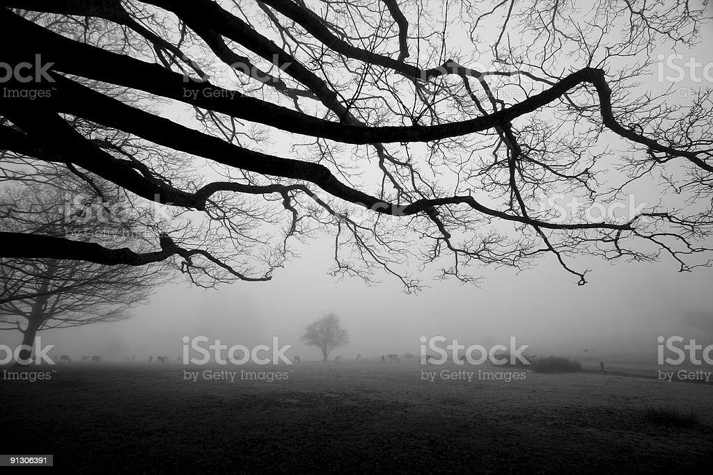 Knole Park in Kent, England stock photo