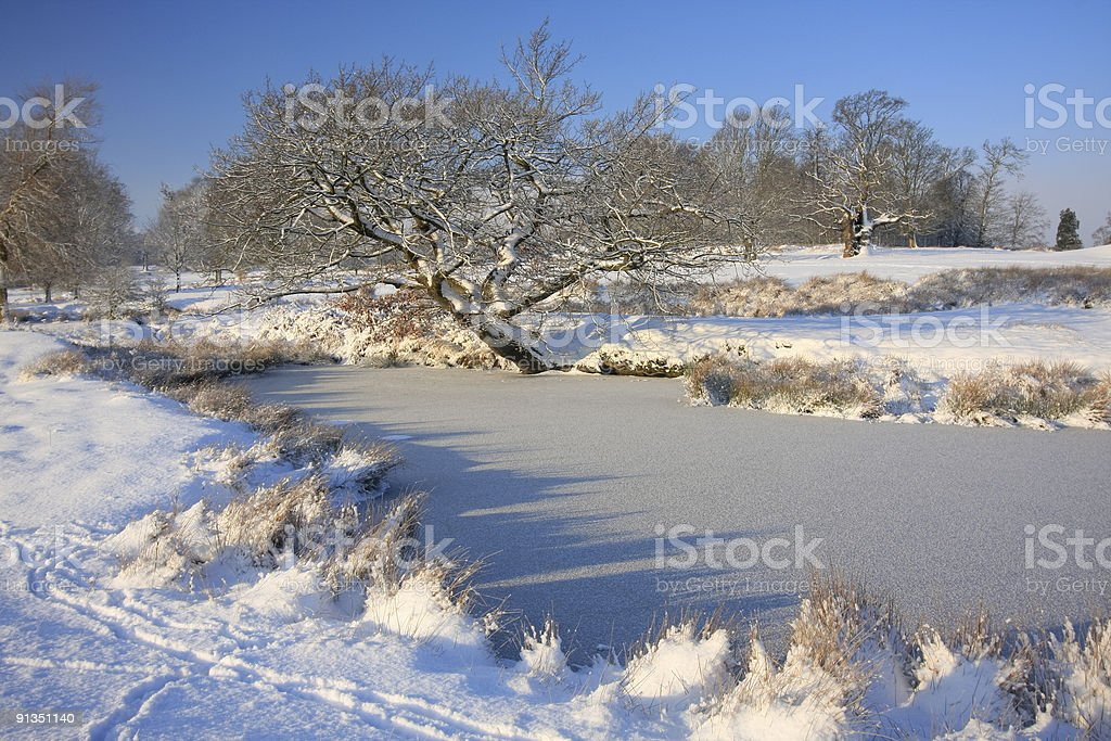 Knole Park in Kent, South East England royalty-free stock photo