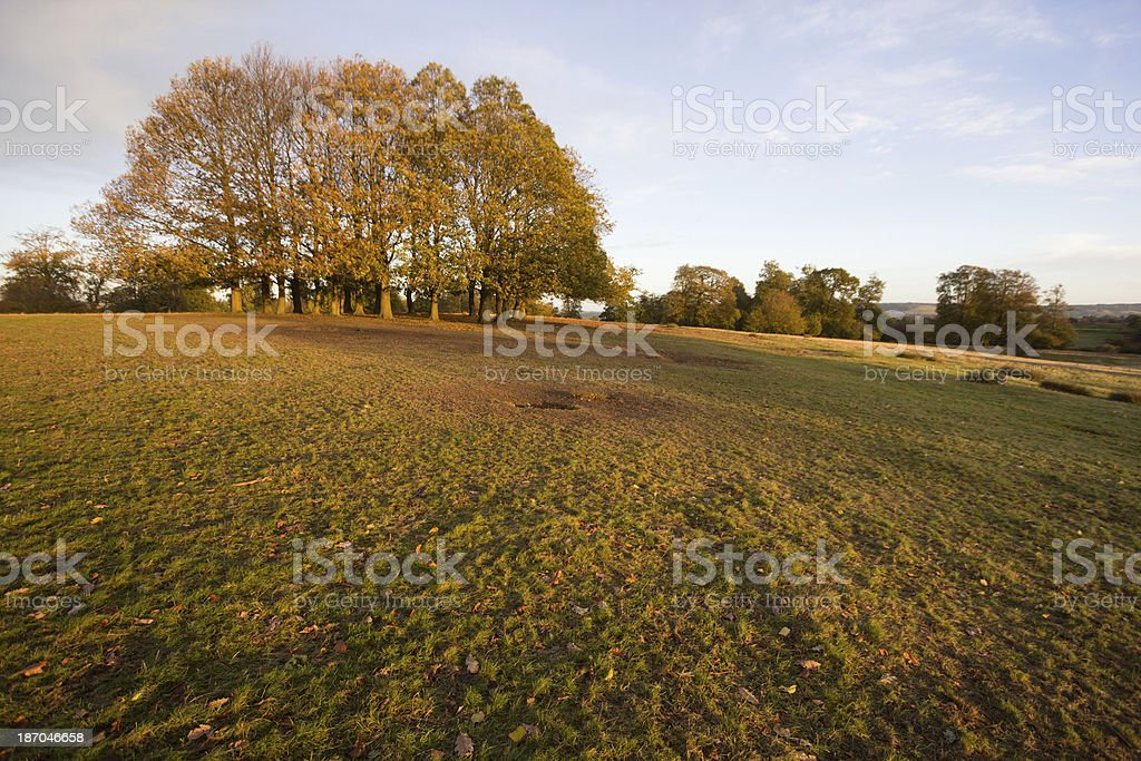 Knole Park in Sevenoaks, England royalty-free stock photo