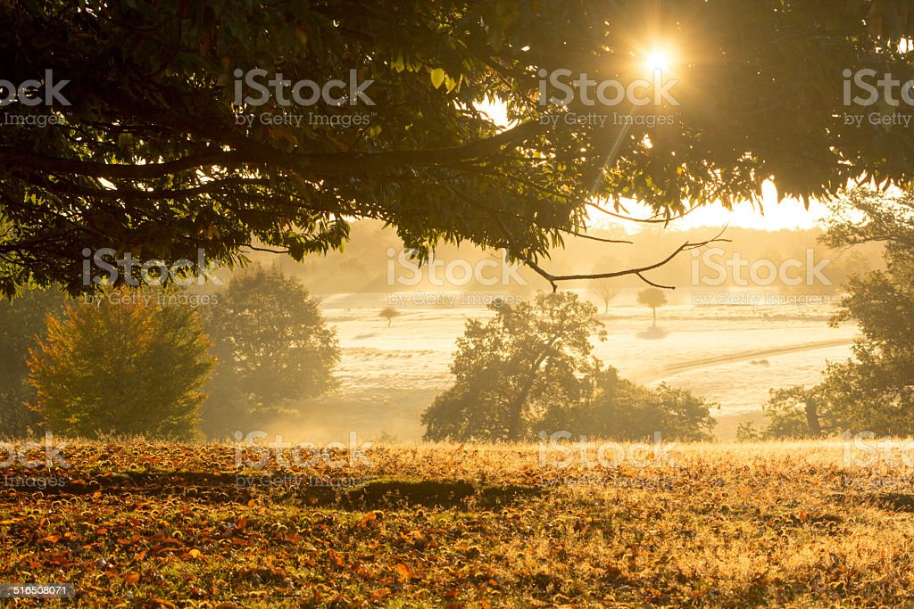 Knole Park in Sevenoaks, England stock photo