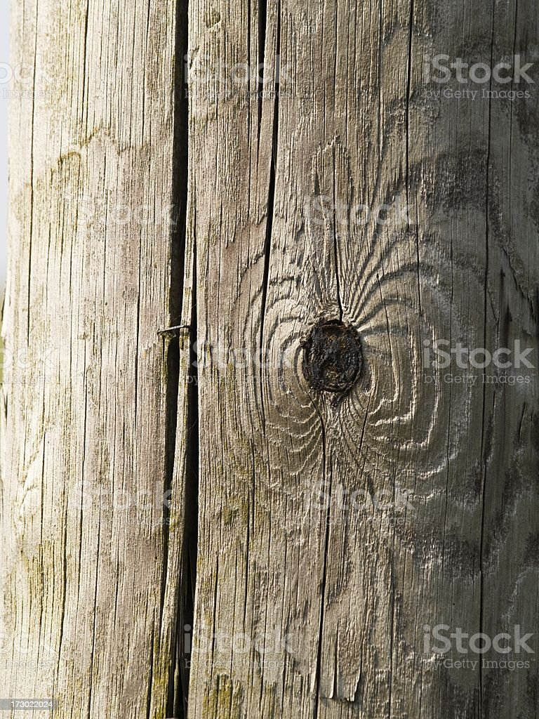 Knot and staple in telephone pole royalty-free stock photo