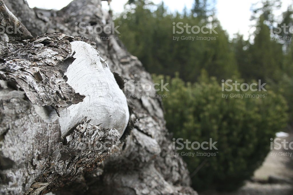 Knot on Log royalty-free stock photo