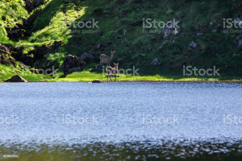 Kogen onsen pond and Ezo deer stock photo