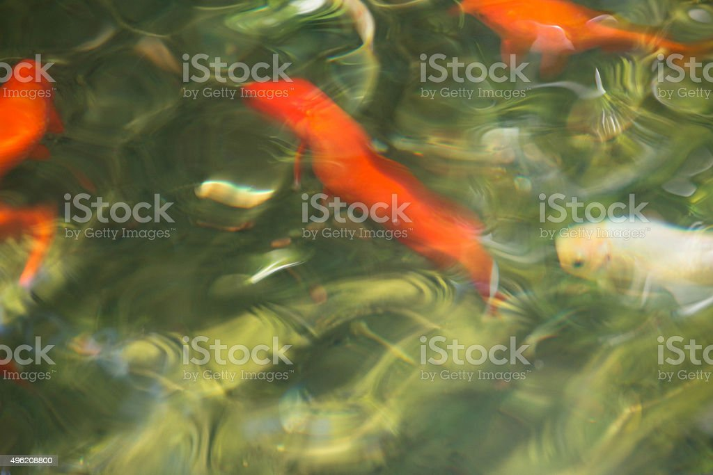 Koi fish and goldfish - abstract photo in pond_3 stock photo