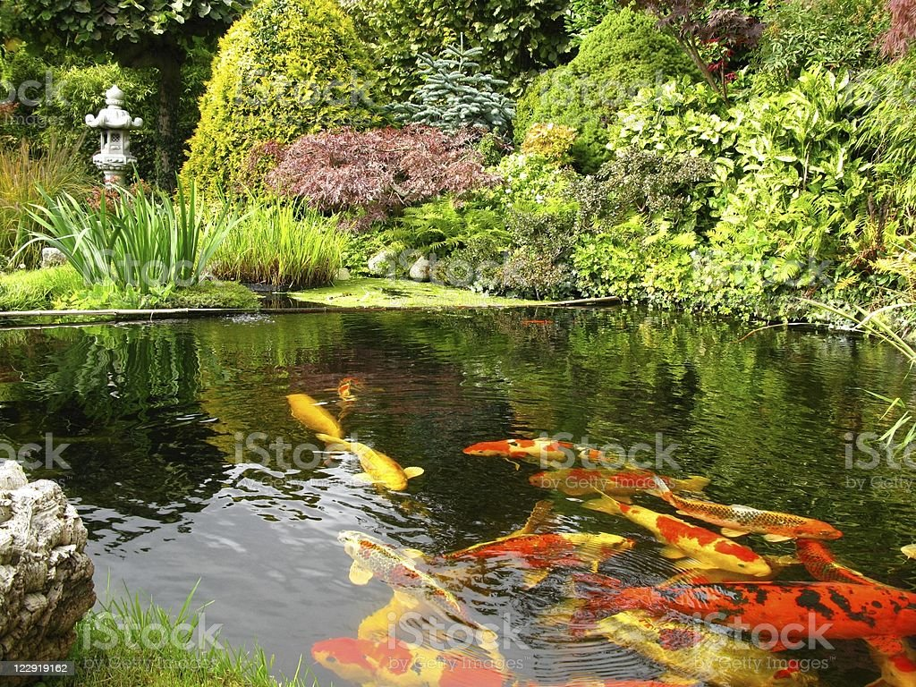 jardn japons con estanque de peces koi foto de stock libre de derechos