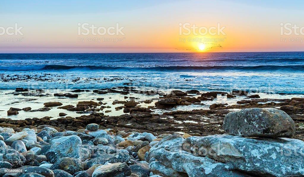 Kommetjie bird sunset at the rocky beach stock photo