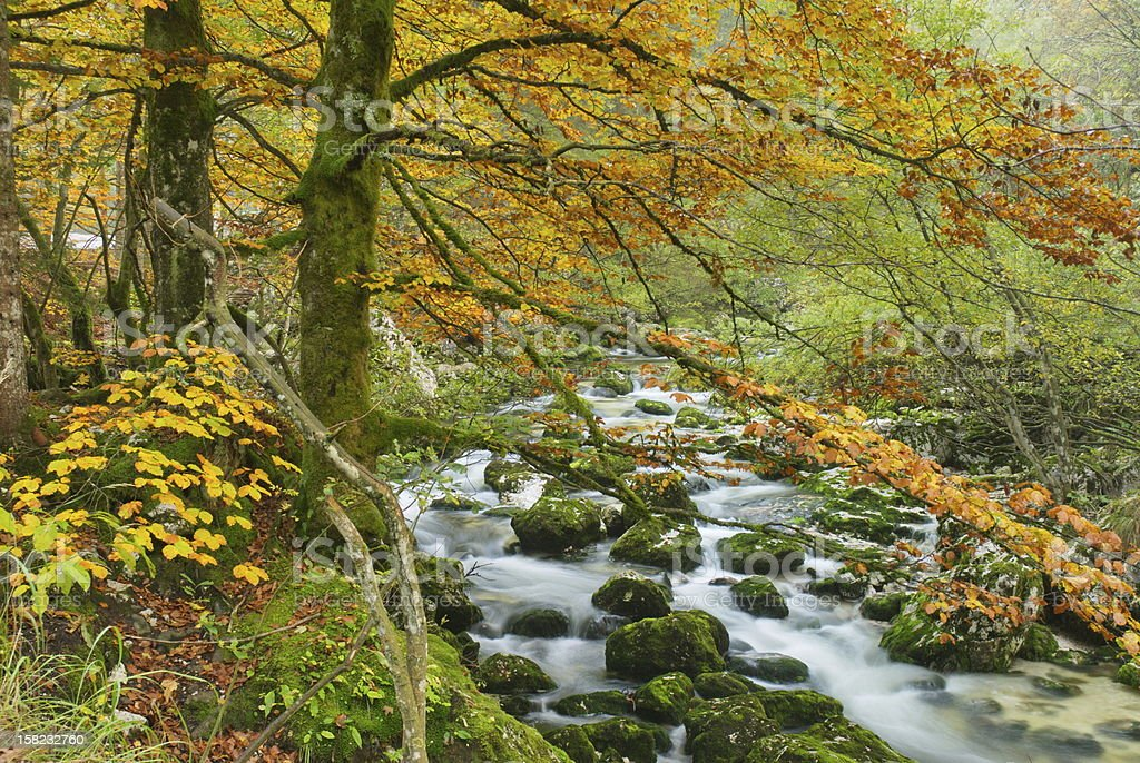 Komna river royalty-free stock photo