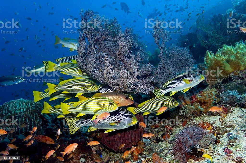 Komodo fish stock photo