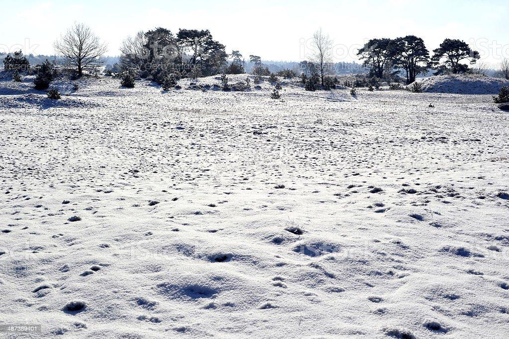 Kootwijkerzand に雪。 ロイヤリティフリーストックフォト
