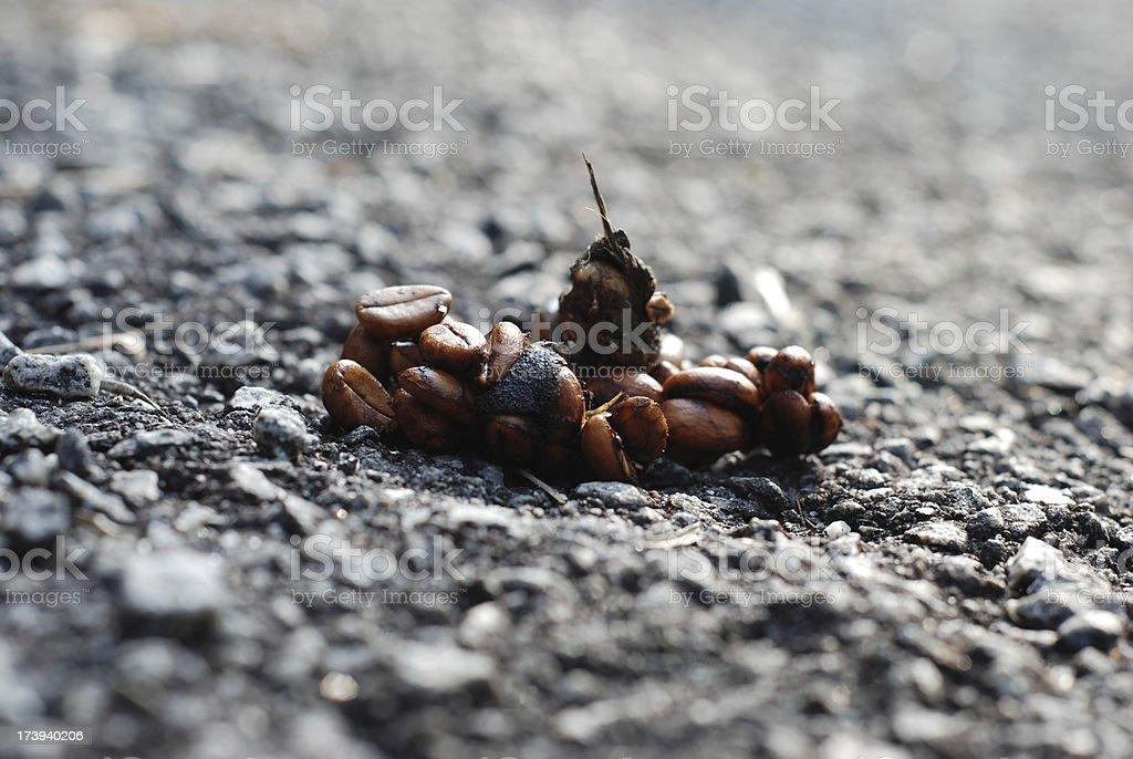 Kopi Luwak Coffee Beans stock photo