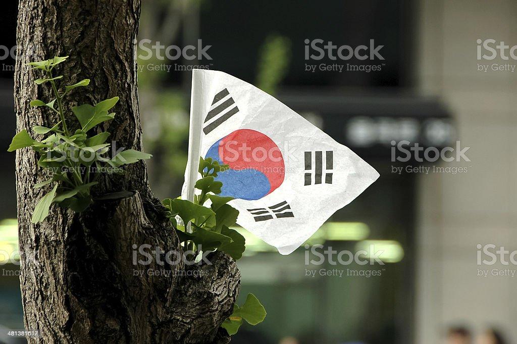 Korean flag on a tree stock photo