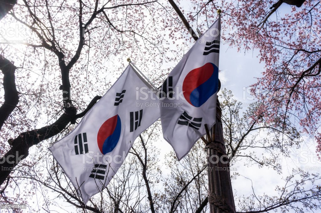 korean flag with cherry blossoms stock photo