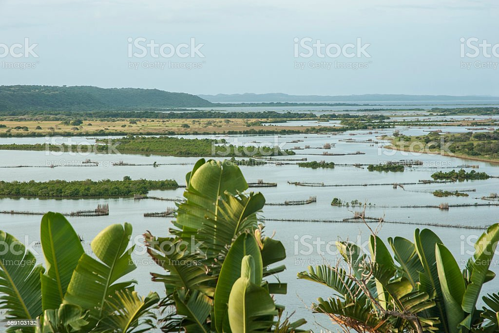 Kosi Bay River Estuary, with Kosi Palms and fish traps stock photo
