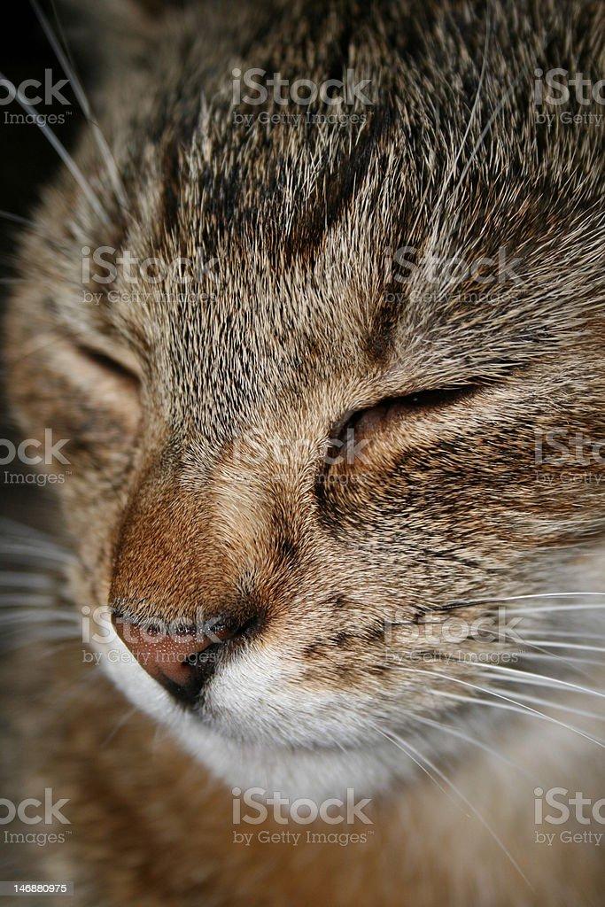 kot cat stock photo