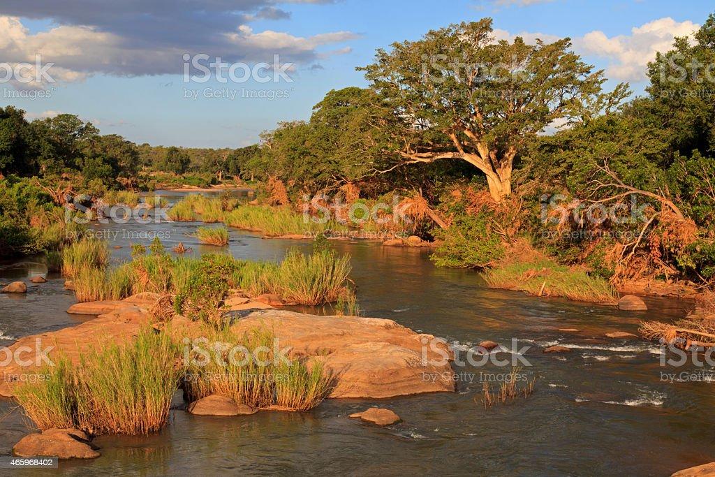 Kr?ger Nationalpark stock photo