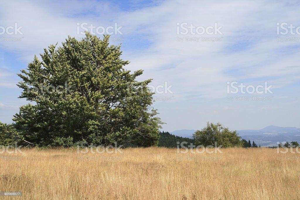 Krkonose Mountains, Czech Republic royalty-free stock photo