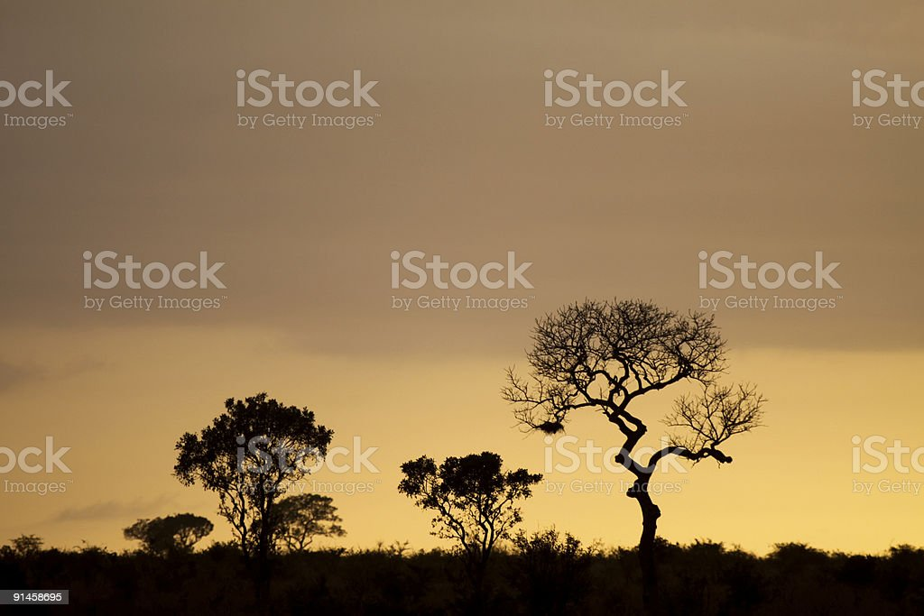 Kruger Park in Mpumalanga, South Africa royalty-free stock photo