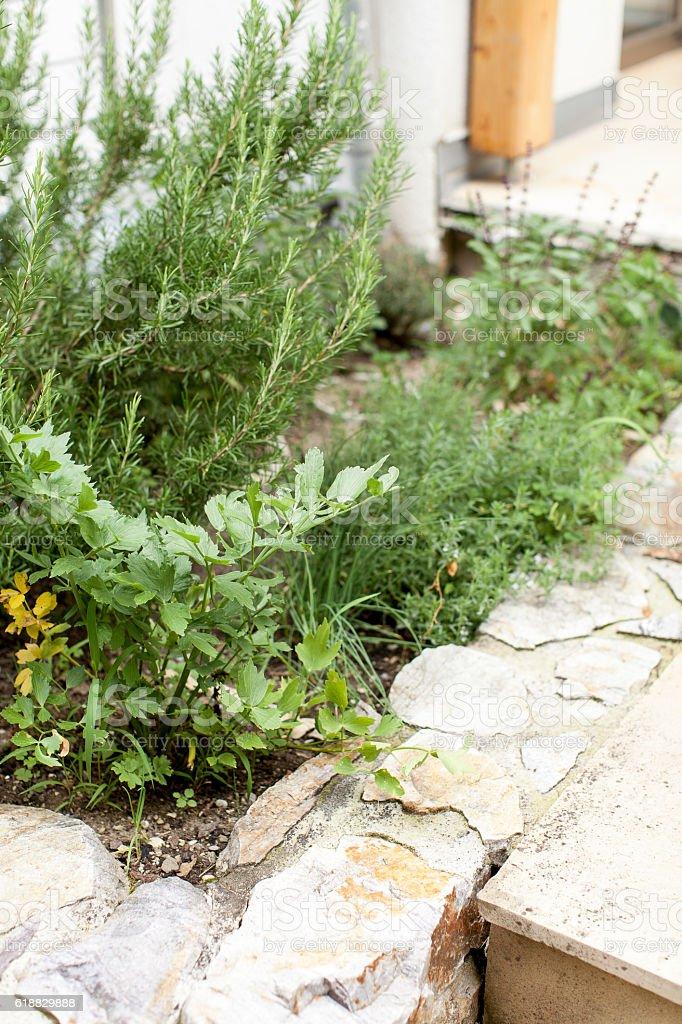 Kräutergarten stock photo