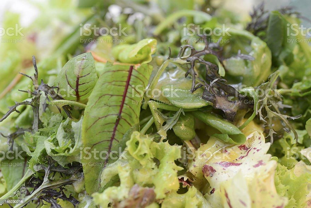 Kräutersalat macro stock photo