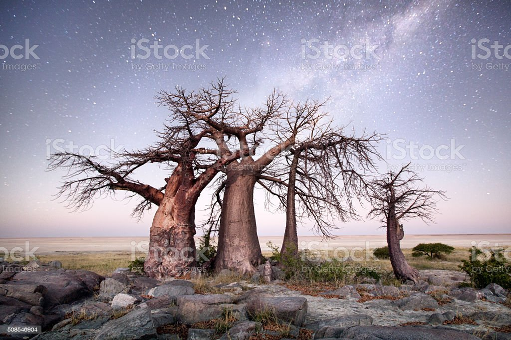 Kubu Island, Botswana stock photo
