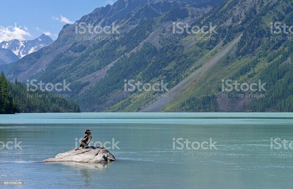 Kucherla lake. Big black cormorant sitting on a rock. stock photo