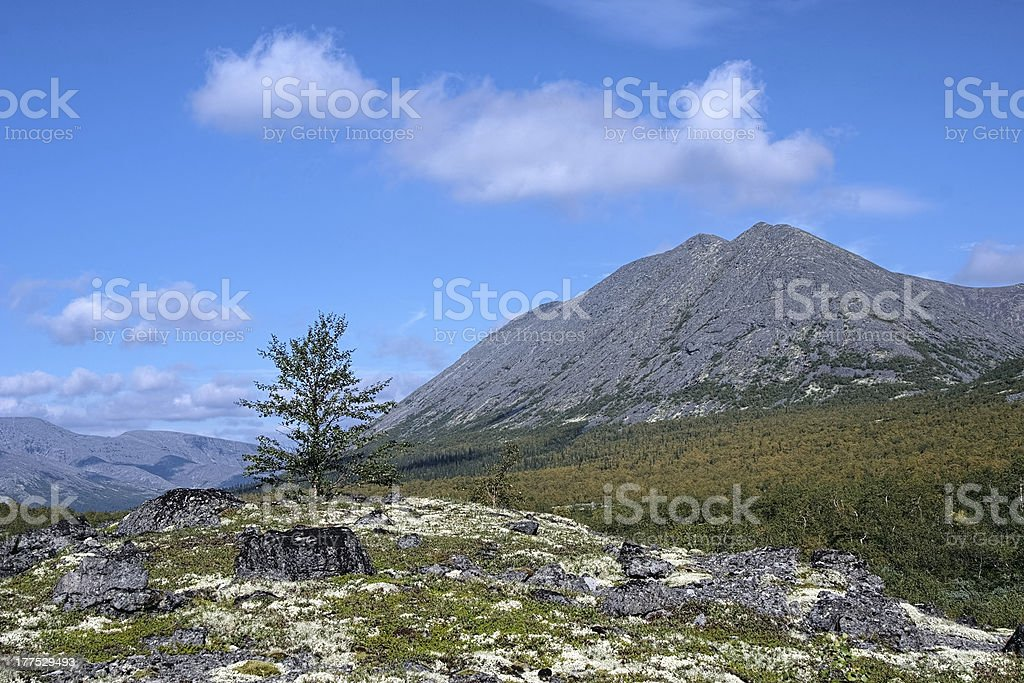 Kuelporr Mount and small birch in Khibiny Mountains stock photo