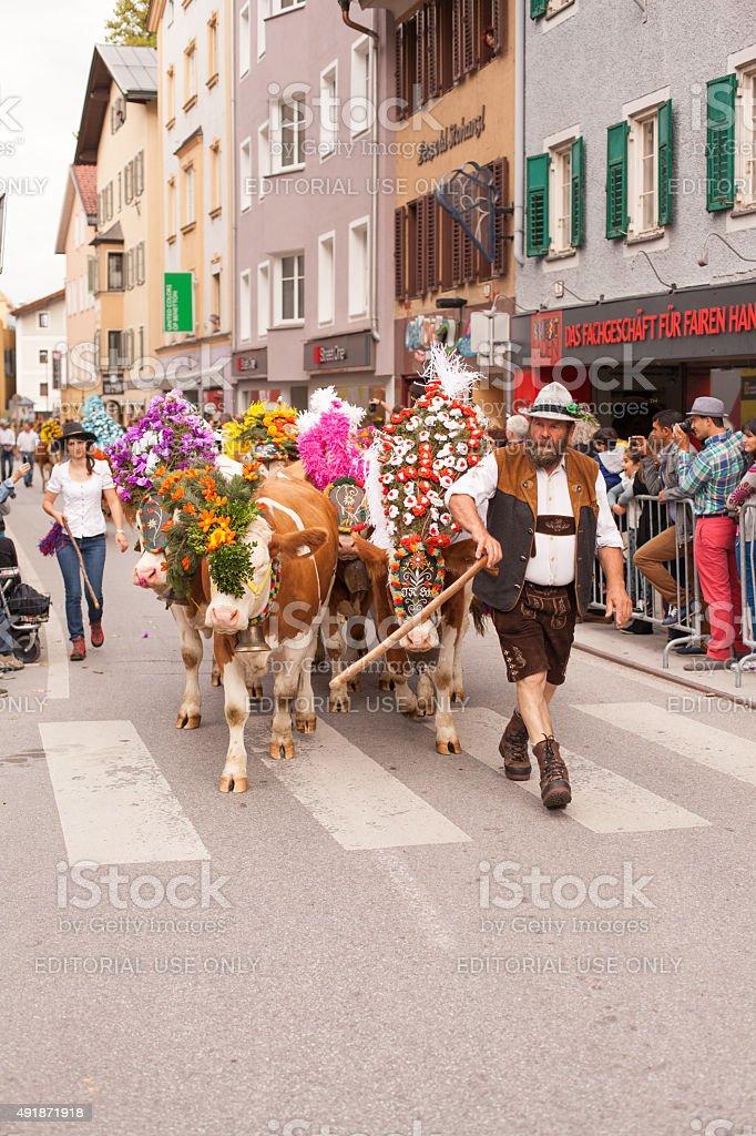Kufstein , Austria , Tyrol 19.09.2015 : Cow Floating Kufstein stock photo