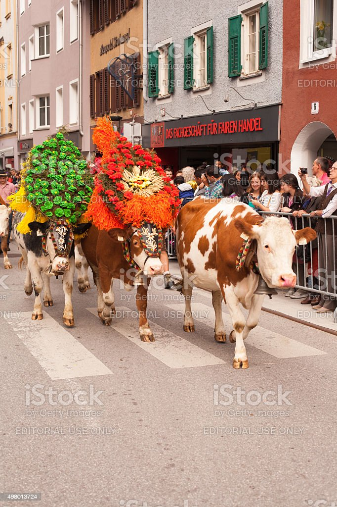 Kufstein/Austria -September19, 2015:  Decorated cows at cattle drive stock photo