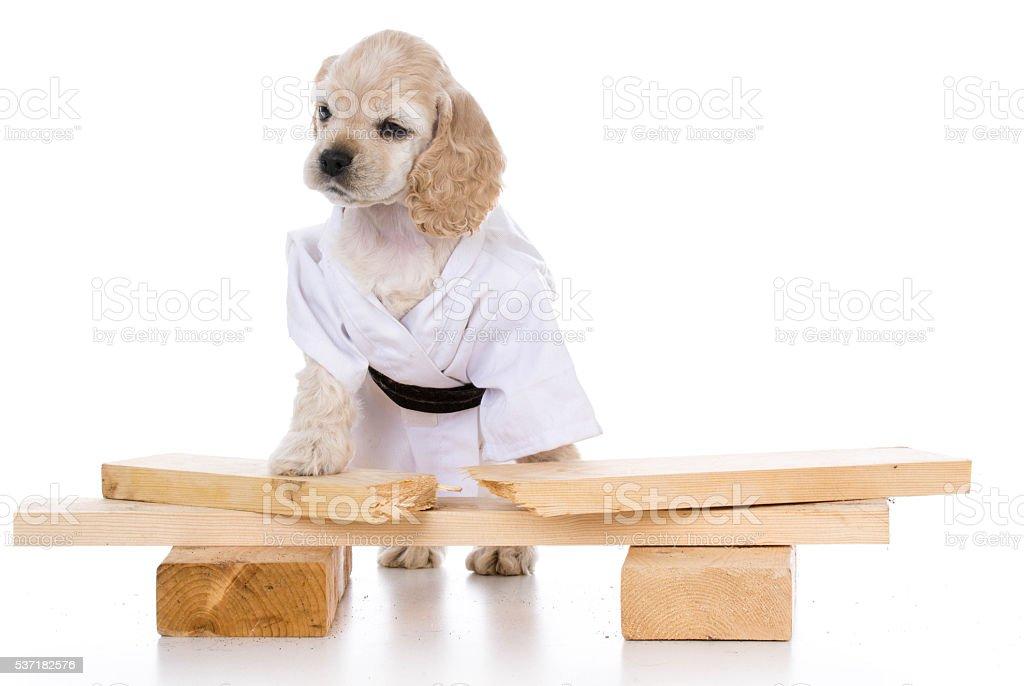 kung fu dog stock photo