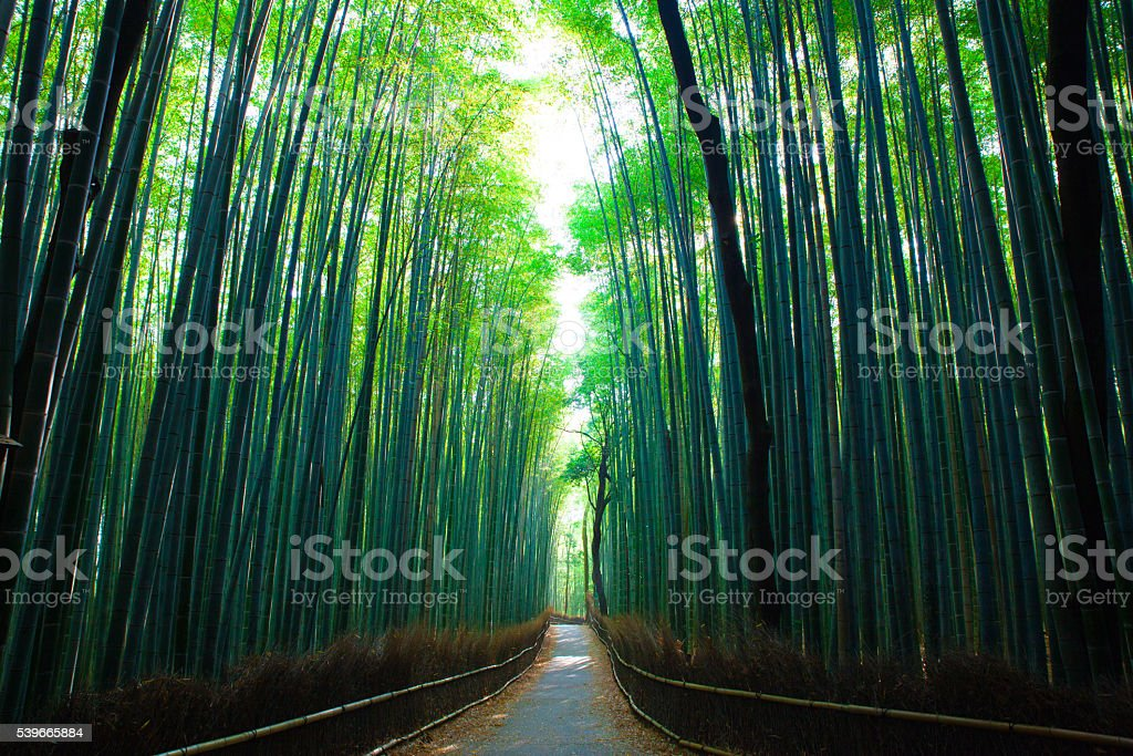 Kyoto Bamboo Forest stock photo