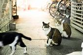 Kyoto Cats