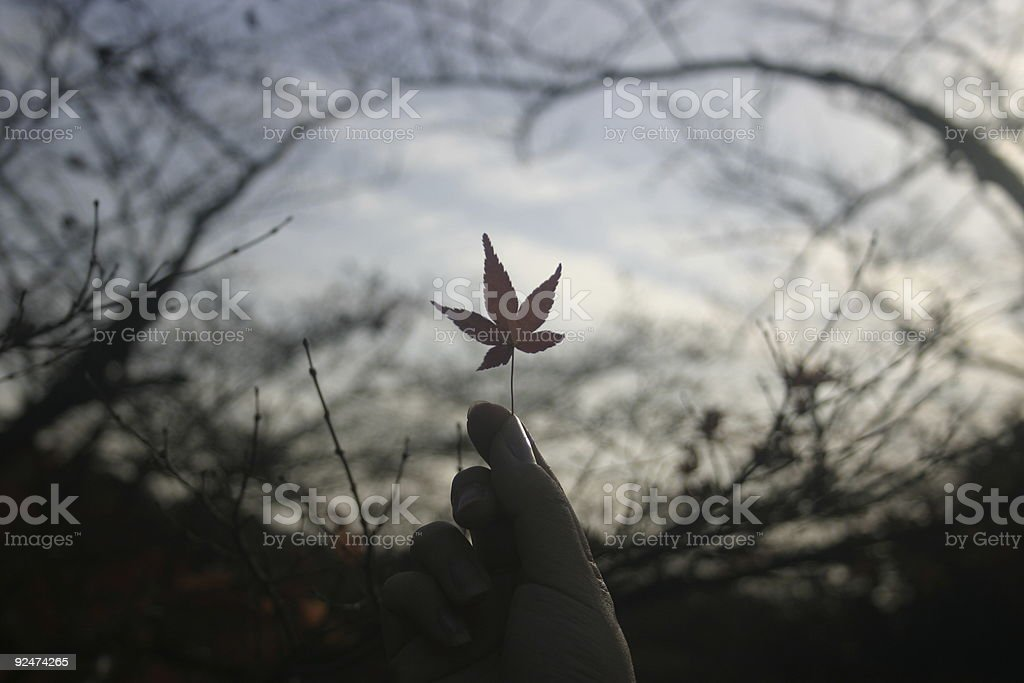 Kyoto Maple Leaf royalty-free stock photo