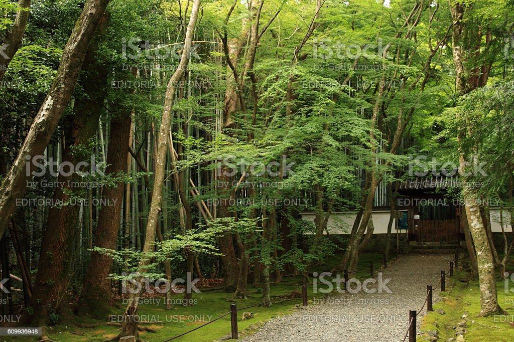 Kyoto.Jizo-in Temple stock photo