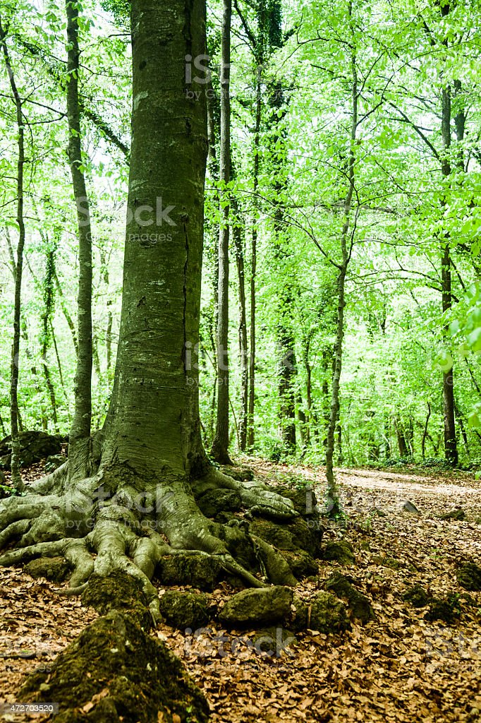 La Fageda stock photo