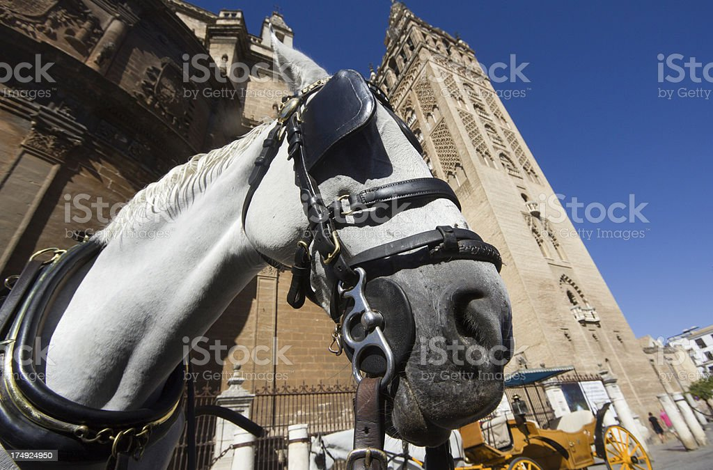 La Giralda in Seville, Spain royalty-free stock photo