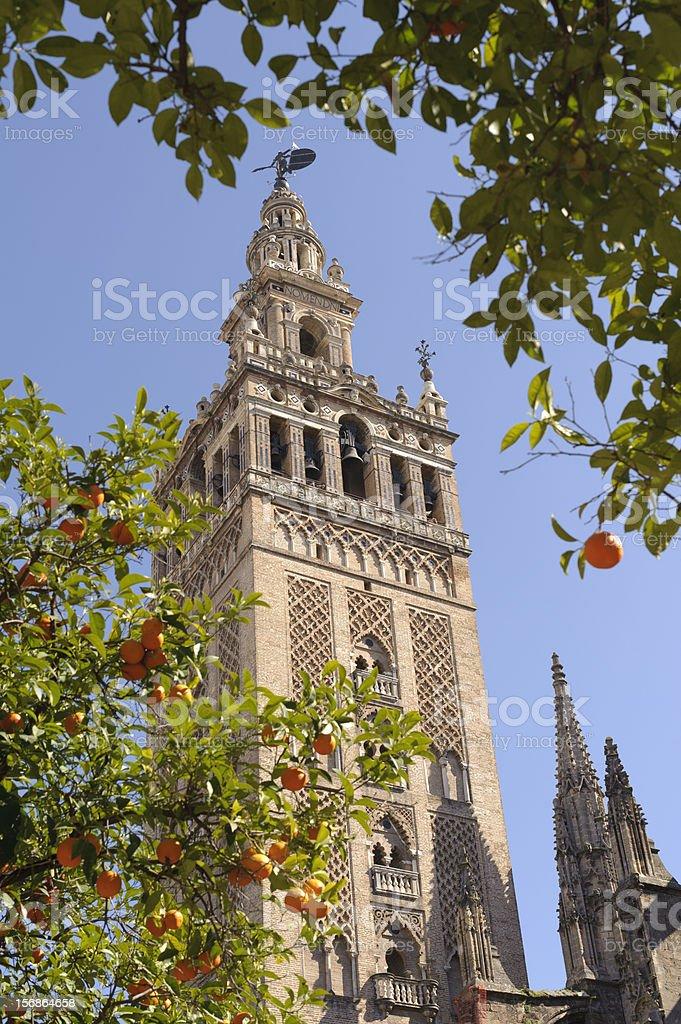 La Giralda with Seville Orange Trees royalty-free stock photo