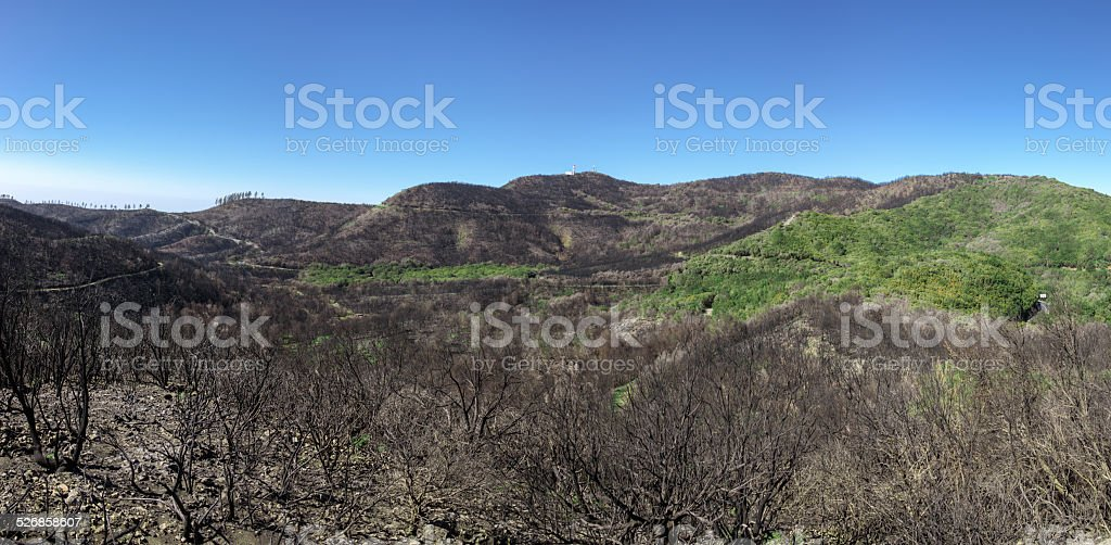 La Gomera - Landscape after the fire in 2012 royalty-free stock photo