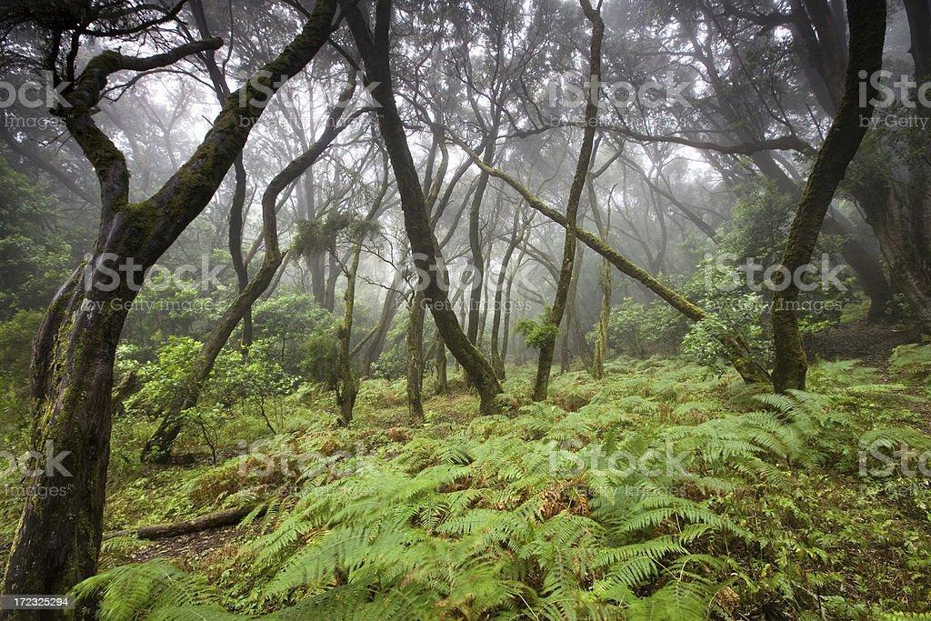 la gomera-rain forest royalty-free stock photo