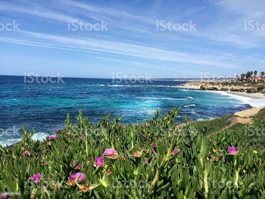 La Jolla Beach San Diego Landscape Flowers stock photo