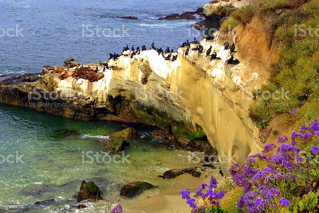 La Jolla Cove stock photo