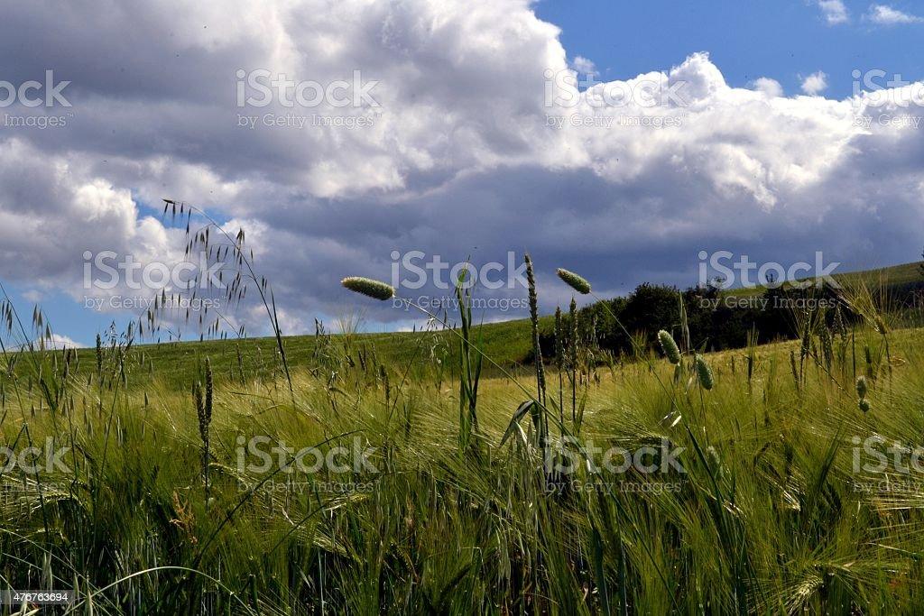 La natura del sud Italia stock photo