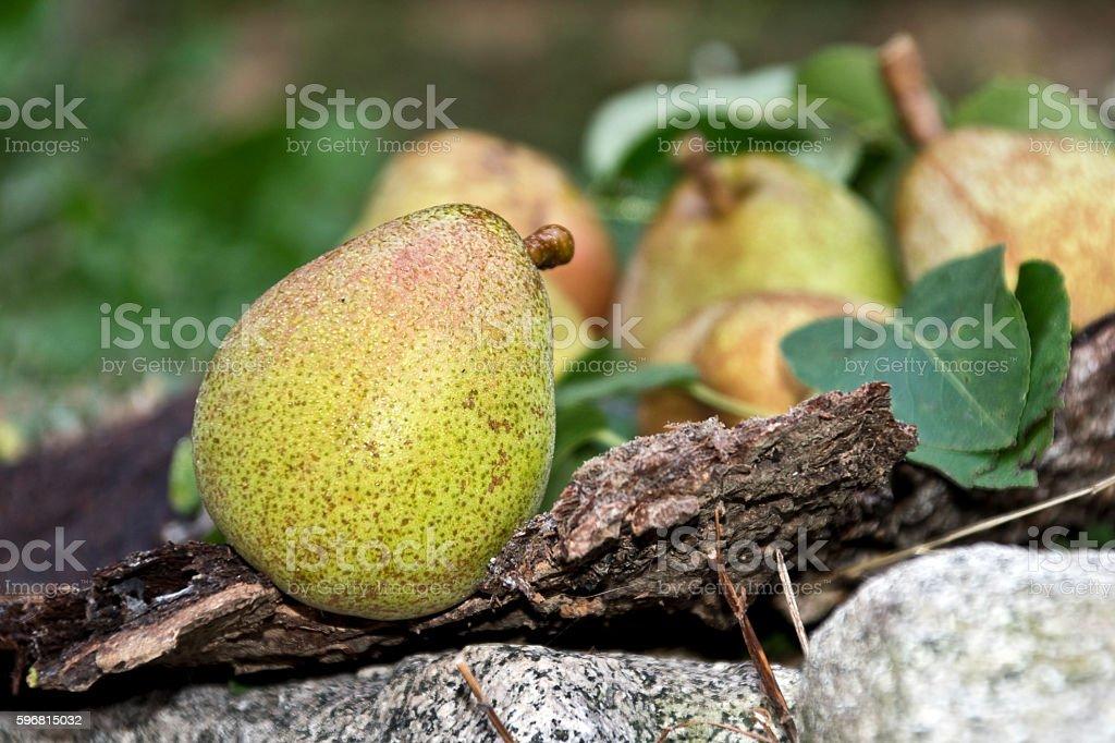 la pera in primo piano stock photo
