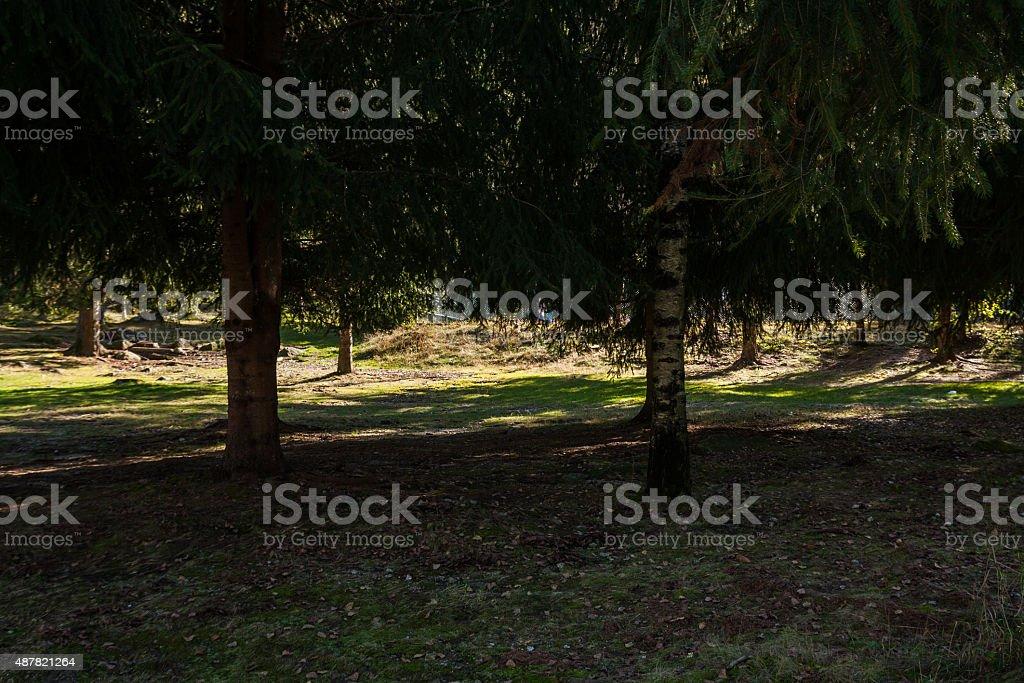 La pineta di Santa Maria Maggiore,  Val Vigezzo, Piemonte, Italia stock photo